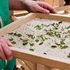 Worm House tray