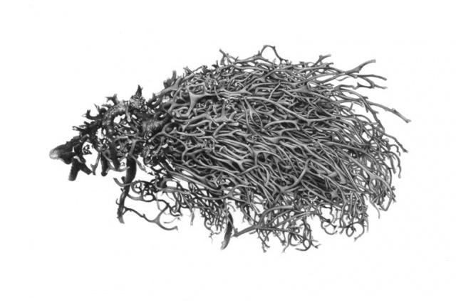 Forsaken Articles: Sea Grass IV