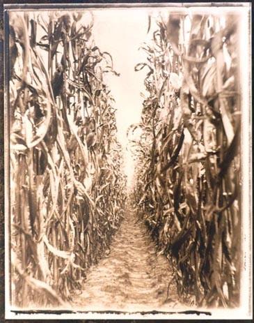 Tintype, Southern photogrpahy