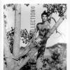GLENN BISHOP BEEFCAKE HUNK NUDE IN TREE OETTINGER PHOTOGRAPH