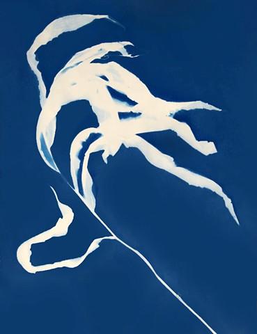 Cyanotype Print, Untitled