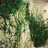 Seaweed Wall, Creative Reseach Laboratory