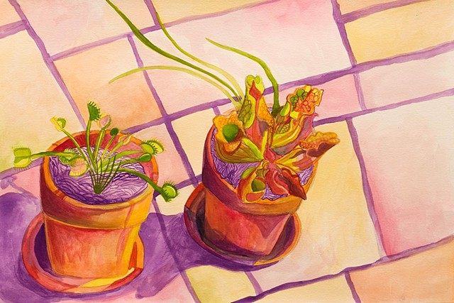 Carnivorous Potted Plants