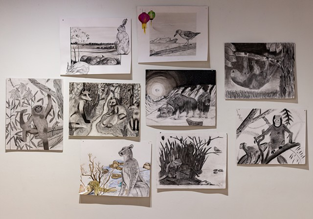 "Natural History Museum Drawings in ""Wunderkammer"" Elements of Art Show, Levitt Gallery, UIowa"