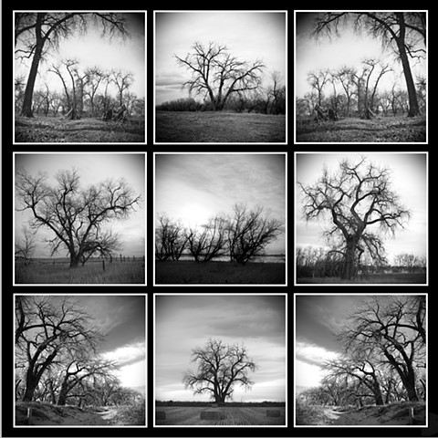 Grid Series - Holga Trees - Abandoned