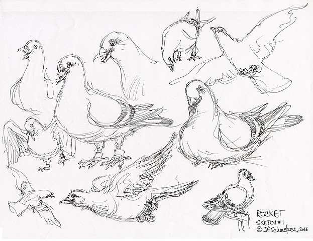 Rocket Pigeon preliminary drawing#1