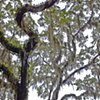 Tree, SC