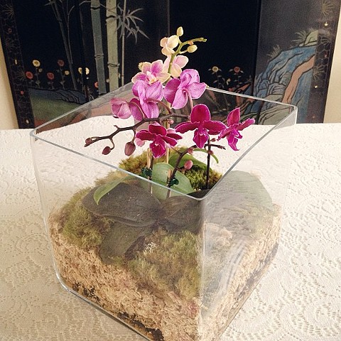 Cube Terrarium