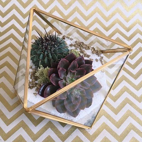 Small Geometric Terrarium