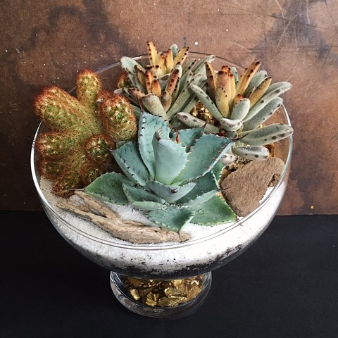 Pod Terrarium with stand  (out of stock)