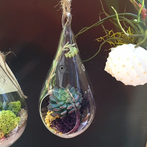 Small Tear Drop Terrarium  (Out Of Stock)