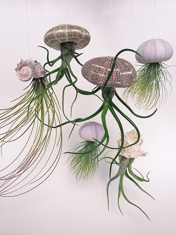 "Air Plant ""Jellyfish"" $6-$18"