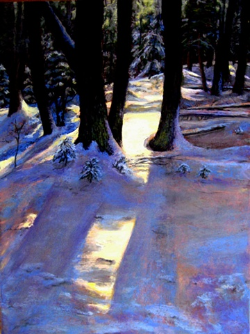 deep woods, snow, trees, shadows