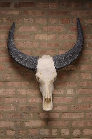 Wildebeest Skull