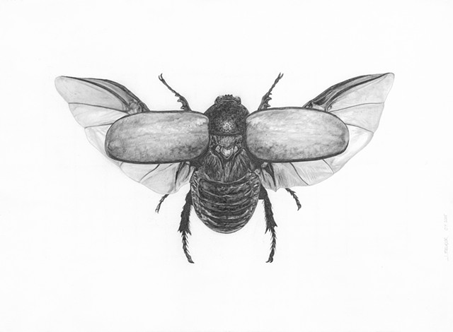 Untitled (Insect)