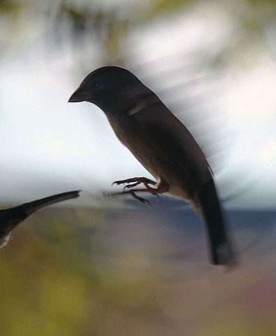Birds, teenage birds, bird behavior, bird pairing, bird mating, bird feeding, bird flight, finches.