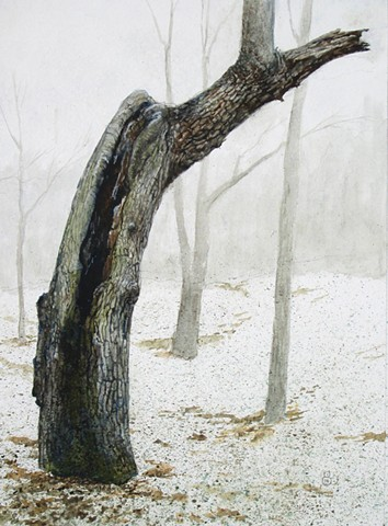 Original watercolor on illustration board of a young dotarded tree at the Spoon River Recreation Area by Mark Royal Schroll Midwest regional landscape artist