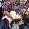 Guatemalan Women w/Chickens