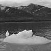 Alaskan Ice Sculpture