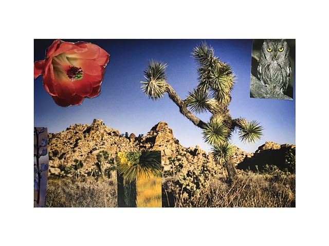 4th Grade Student Work   Photomontage from the workshop with area 4th graders inspired by a field trip to JTNP.