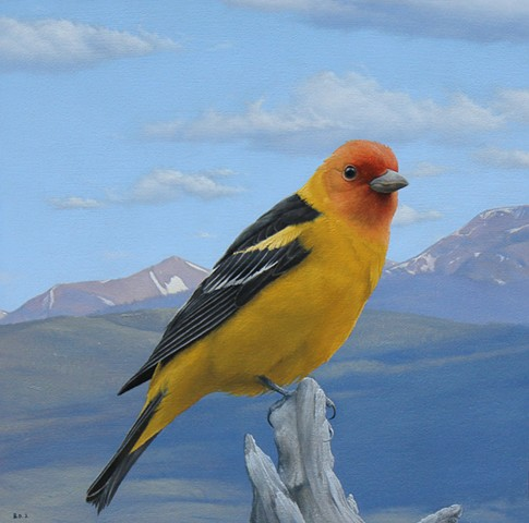"""Western Tanager"""