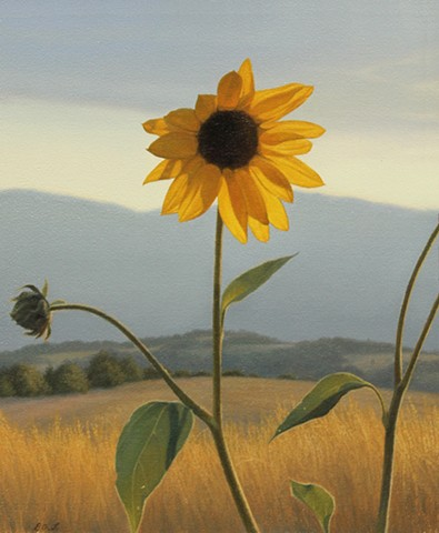 """Prairie Sunflower"""