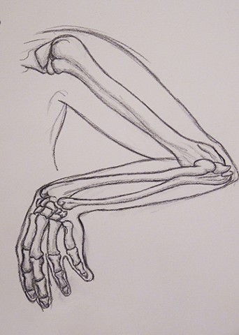Life Drawing 1/ Skeleton studies - Hand and Arm Anonymous
