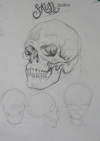 Life Drawing 1/ Skeleton Studies - Skull Anonymous