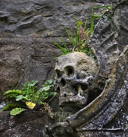 Skull with Plants