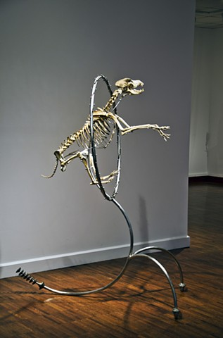 skeleton, sculpture, Steven Finke, dog