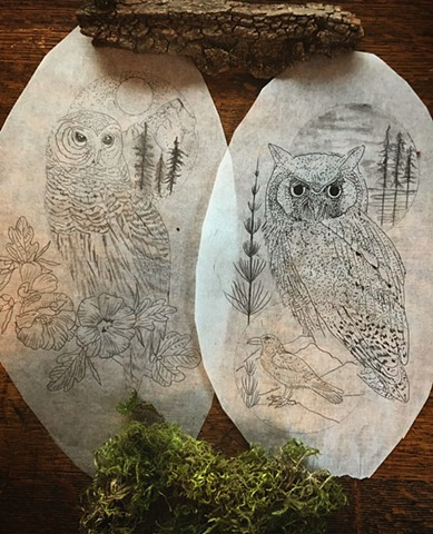 folklore--owls