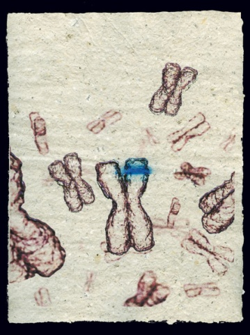 Document 12 (Mutation)
