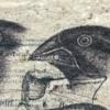 Document 24 (Darwin)