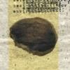 Document 22 (Cranium)