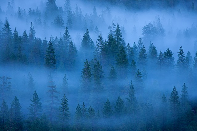 Trees and Fog, Yosemite Valley, 2010