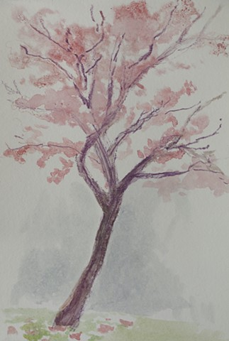 March 13/Tree in the Rain