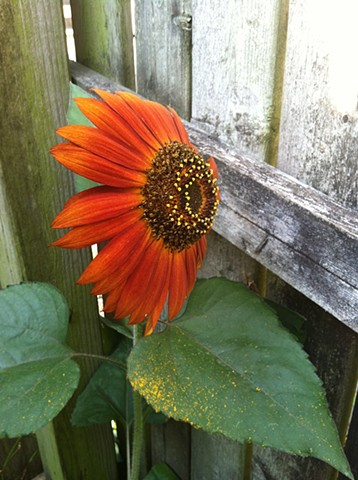 image of sunflower used for paper