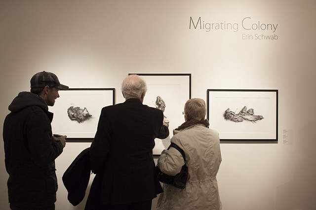 Migrating Colonies Exhibition 2013