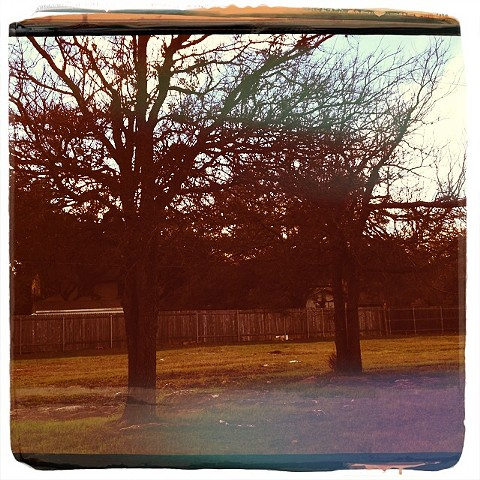 Trees silhouetted in a Texas Fall, with warm oranges and yellows has the appearance of a vintage Polaroid photograph.