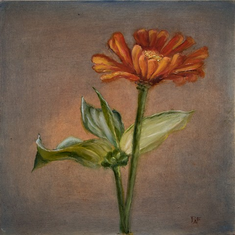 Zinnia - single flower