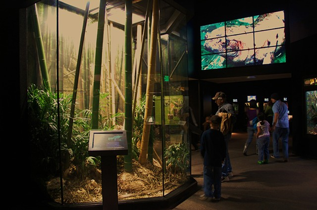 Museum of Living Art, Fort Worth Zoo; King Cobra & Reptile Hall Exhibits