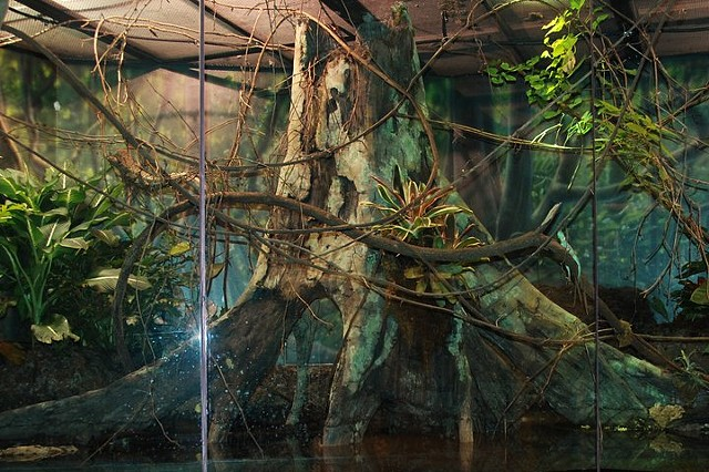 Amazonian Flooded Forest; Museum of Living Art, TX
