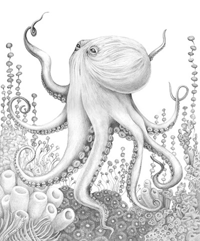 Octopus' Garden Original Graphite Drawing on Bristol, Framed