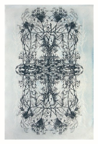 Print based on botanical drawings combine with tea tinted cyanotype