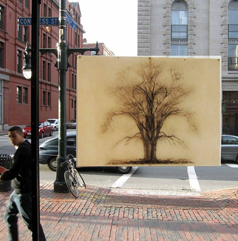duch elm tree in the window of the ICA Portland maine