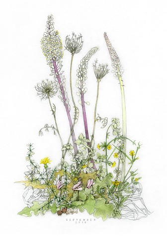 drawing of September wildflowers on the island of Kea, Greece