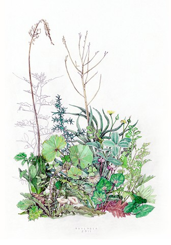 drawing of November wildflowers on the island of Kea, Greece