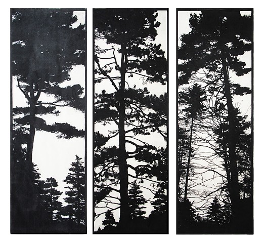silhouette of pine and spruce trees