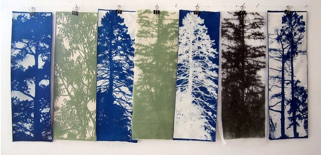 cyanotypes and lithographs of pine trees in blues and greens
