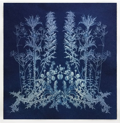 cyanotype of July wildflowers from Kea Greece